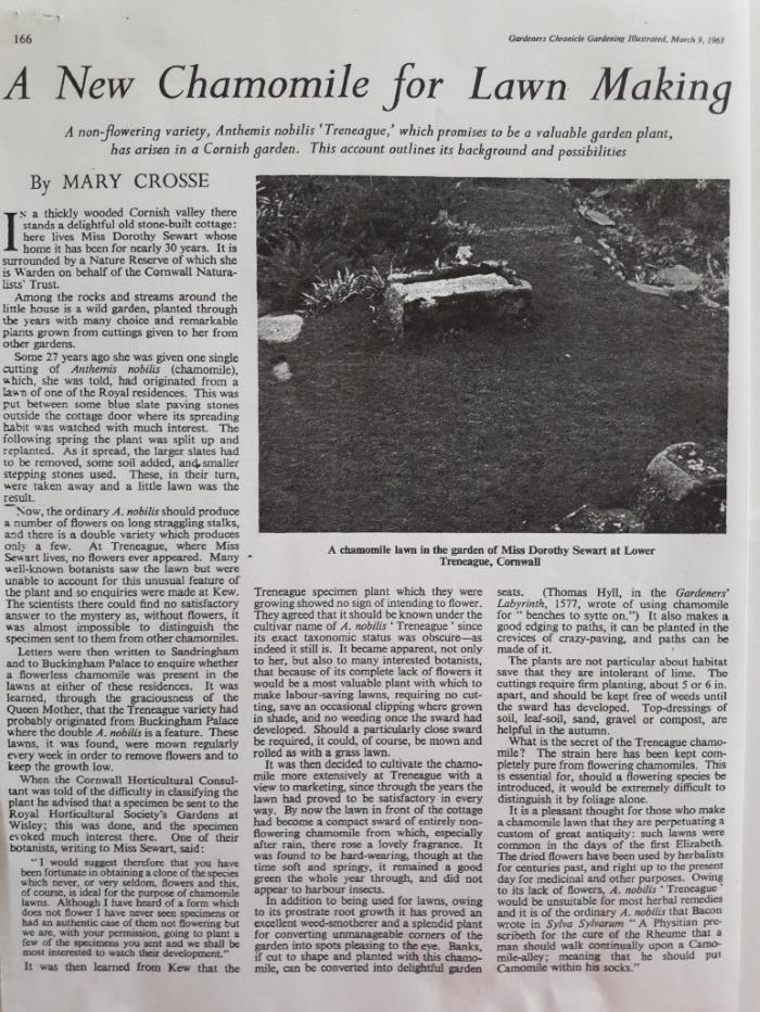 1963 Gardeners Chronicle article on chamomile lawns
