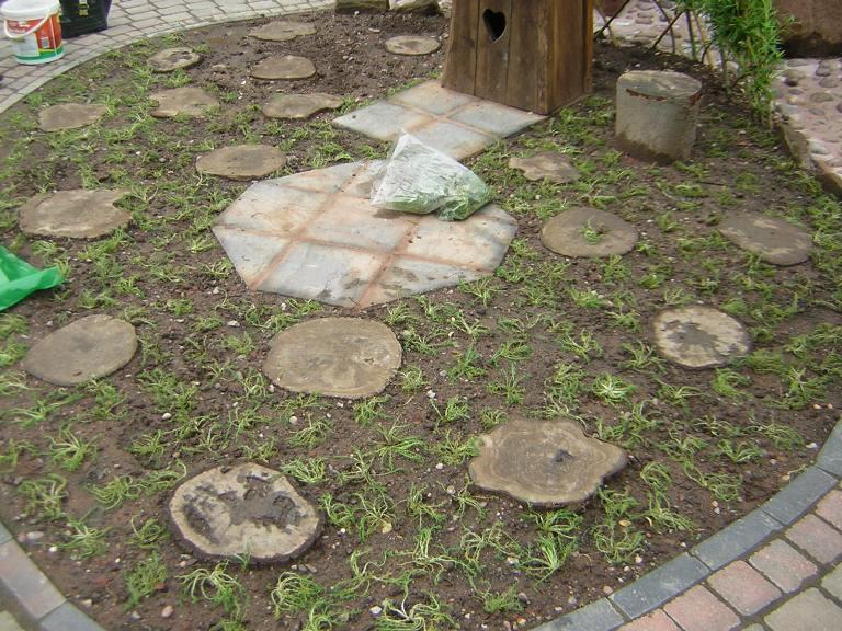 Planting bare root chamomile plugs