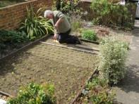 Planting a chamomile lawn
